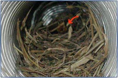 Nest inside duct