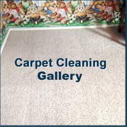 Carpet Gallery