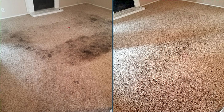 Carpet Cleaning by Dalworth